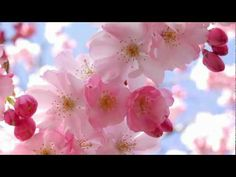 Yiruma - Love me - YouTube