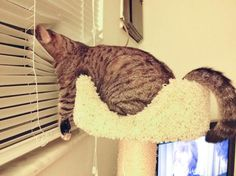 20ofthe cutest cats who seriously miss their owners