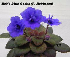 Rob's Blue Socks (R. Robinson)