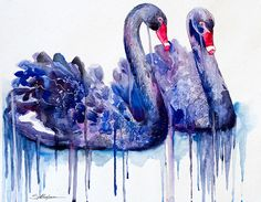 Original Watercolour Painting- Black Swans, bird watercolors, swans, swan, birds, bird, animal by SlaviART on Etsy https://www.etsy.com/listing/175374894/original-watercolour-painting-black