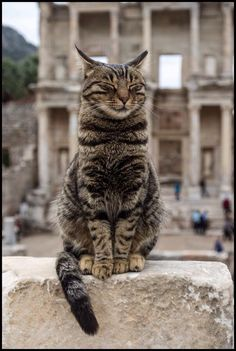 by geraldlanger cat,ephesus,turkey Cool Cats, Cute Cats And Kittens, White Kittens, Adorable Kittens, Animals And Pets, Funny Animals, Cute Animals, Pretty Cats, Beautiful Cats