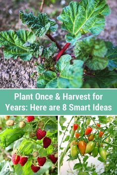 Plant Once & Harvest for Years: Here are 8 Smart Ideas