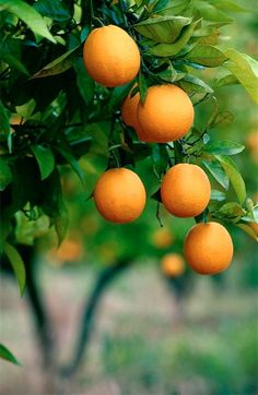 ✔ Oranges - I love so much...