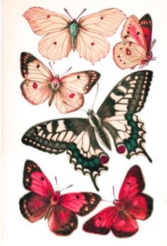 Free,fun printables and simple craft ideas Butterfly Illustration, Butterfly Drawing, Butterfly Crafts, Butterfly Wallpaper, Vintage Butterfly, Free Collage, Wall Collage, Butterfly Template, Printable Butterfly