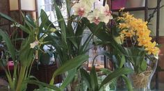 All about Water Culture Orchids - what methods work best for what types of orchid YouTube