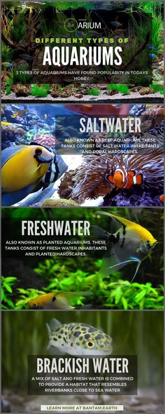 Aquarium Care Tips for Saltwater Fish Aquarium Setup, Diy Aquarium, Aquarium Design, Aquarium Fish Tank, Fish Tanks, Aquarium Ideas, Reef Tanks, Fish Aquariums, Aquarium Lighting