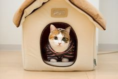 One day, I will own a cat. And it will be self-sufficient for the most part. And it will be glorious.