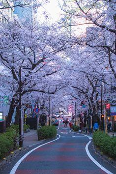 Japon Tokyo, Shibuya Tokyo, Tokyo City, Aesthetic Japan, City Aesthetic, Travel Aesthetic, Tokyo Ville, Japan Spring, Tokyo Japan Travel