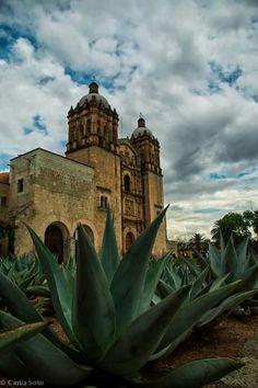 Agave en Oaxaca, Mexico / Iglesia de San Felipe Neri Church