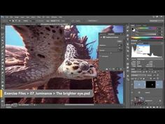 Adobe Photoshop CC 2015 Tutorial | 074 Putting the Histogram to use