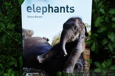 elephants: Book of the Week GIVEAWAY . . . excellent nonfiction!