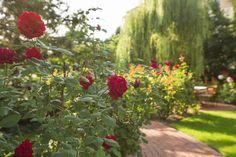 O nás Villa Rosa, Garden, Plants, Rosario, Garten, Planters, Plant, Gardens, Tuin