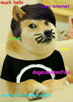 Yes, a rare dogeisnotonfire