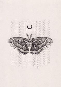 Lunar moth Lunar moth,tattoo Lunar moth by Peter Carrington Tribal Tattoo Designs, Tribal Tattoos, Cool Tattoos, Moth Tattoo Design, Arabic Tattoos, Tatoos, Script Tattoos, Tattoo Papillon, Borboleta Tattoo