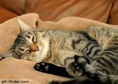 Kitty has a bad dream