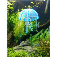 http://www.fishtankdecorations.biz/  A Good Way in Choosing Beautiful Fish Tank Decorations for Your Home