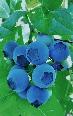 Fruit Plants, Fruit Garden, Fruit Trees, Fruit And Veg, Fruits And Vegetables, Fresh Fruit, Colorful Fruit, Exotic Fruit, Fruits Photos