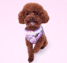 A Female should be two things: classy and fabulous Chanel wearing our classy #carolinacorrodi Hawaii Harness              #hunde #traumhund #9gagcute #cutedog #hundeaufinstagram #shihtzu #hundepullover #dogtraining #swissdogs #ladbible #chien #carolinacorrodi #weeklyfluff #thedodo #pomeranian #instachien #dogsofinstagram #swissdog #petfluencer #dogblogger #hundefotografie #pugpuppy  #hundar #pug #zurich #geneva #switzerland #dogstagram #instachien Geneva Switzerland, Dog Fashion, Zurich, Classy And Fabulous, Pomeranian, Shih Tzu, Dog Training, Pugs, Cute Dogs