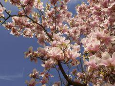 Frühling an der LUDWIGGALERIE im Kaisergarten. Foto: Frühling 2015 © LUDWIGGALERIE