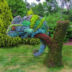 Awesome flower chameleon