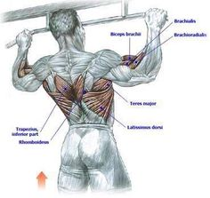 pull up muscles worked diagram dusk to dawn light wiring 99 best exercises images exercise workouts men gym overhand grip is ups underhand chin where i come from one of the compound for b fitness