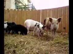 ζώα του αγροκτήματος και της ζούγκλαας.wmv - YouTube