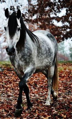 Ein wunderschönes Pferd auf einer Wiese voll mit Laubblättern. #APASSIONATA
