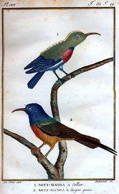 1799-1808Georges Louis Leclerc, comte de Buffon Histoire naturelle: générale et particulière (Oiseaux)
