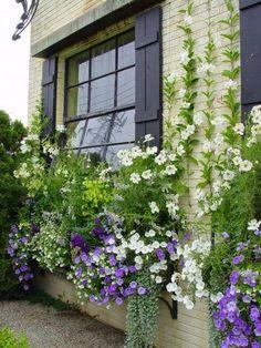 Flores trepadoras en muro vivienda