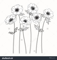 Drawing anemone flower on white backgrounds. Vector