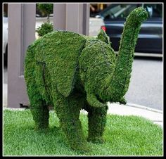 For my front yard?