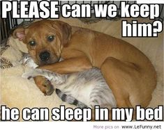 <3 <3 Animal Jokes | lefunnynet, funny jokes, quotes, animals, pictures - image #585335 on ...