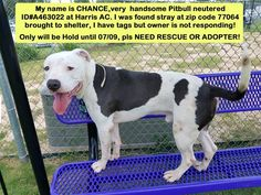 ~~DIES SATURDAY, 07/09/16- SUPER URGENT!!~~Houston, Save Lives is our Mission at County of Harris: Veterinary Public Health.·  At close of today, 07/08 CHANCE has nothing! Pledges $60 for him, review tomorrow Saturday 07/09.  UPDATE BY SHELTER 07/07 AT 1.50PM: NOTHING YET FOR CHANCE. :'( **PLEDGES $60 FOR A RESCUE WHO CAN STEP UP** **MY NAME IS CHANCE, I WAS FOUND BY A GOOD SAMARITAN ON NW HOUSTON, NOW AT HARRIS AC, MY TIME IS PASSING,