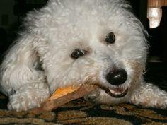 Homemade Sweet Potato Dog Treat Recipe