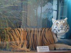 Muséum des Sciences Naturelles | Angers Loire Tourisme