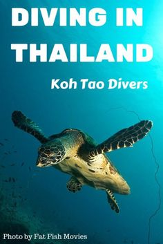 Diving in Thailand with Koh Tao Divers