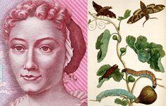 Famous Female Entomologists Part Maria Sybilla Merian, the Mother of Entomology – Entomology Today Botanical Illustration, Illustration Art, Sibylla Merian, Women In History, Strong Women, Flora, Female, Drawings, Film Festival