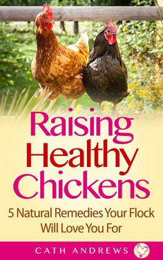 Red Star chickens - also known as red sex-linked - are great egg layers, but are they family friendly?  Find out here!