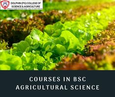 Get the best BSc in Agriculture & Horticulture Courses in India by Dolphin College. Visit us to find B Sc agriculture colleges course & B Sc agri details. University Courses, College Courses, Agricultural Science, Private Sector, Colleges, Livestock, Horticulture, Dolphins, Students