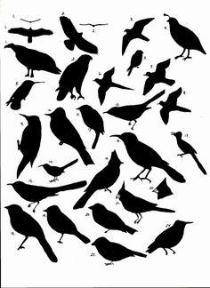 Variety of Bird body forms: Silhouette