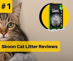 Best Cat Litter, Litter Box, Cat Care Tips, Dog Care, Pumpkin Dog Treats, Cat Scratching Post, Dog Agility, Cat Health, Homemade Dog