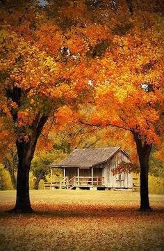 Photography Pretty Red Cold Beautiful Orange Fall
