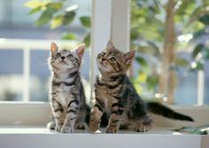 como cuidar de filhotes de gato