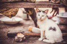 Chat, cat, africa, afrique, pygmées, pigmies - Nos jours africain!