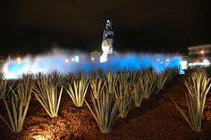 Minerva - Guadalajara - Jalisco - Mexico