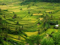 Rice terraces (Ubud, BALI) by Sylvain CDR on 500px