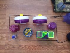 A little about cage sizes. Hamster Care, Hamster Toys, Hamsters, Hamster Supplies, Cage, Fur Babies, Something To Do, Daisy, Board