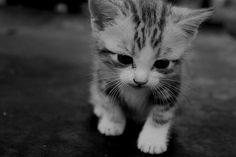 PicturePerfect: 10 Animales tiernos