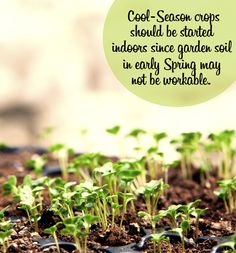 Produce a hearty spring harvest and start your cool-season vegetables indoors! http://www.menards.com/main/c-19348.htm?utm_source=pinterest&utm_medium=social&utm_campaign=gardencenter&utm_content=cool-season-veggies&cm_mmc=pinterest-_-social-_-gardencenter-_-cool-season-veggies
