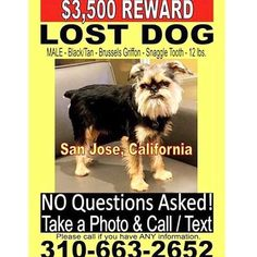 Missing Dog . . . Last seen in San Jose CA area. Please call 310-663-2652 with any information. Someone may have taken in lost was at a shelter and adopted out. Family is desperately looking.  #dogs #dogsofinstagram #pets #petsofinstagram #animalshelter #adoptdontshop #rescue #veterinarian #love #beautiful #dogoftheday #inspire #motivation #lost #lostdog #help #pray #faith #reward #money #cats #catsofinstagram #savingshelterpets #savinglives #share